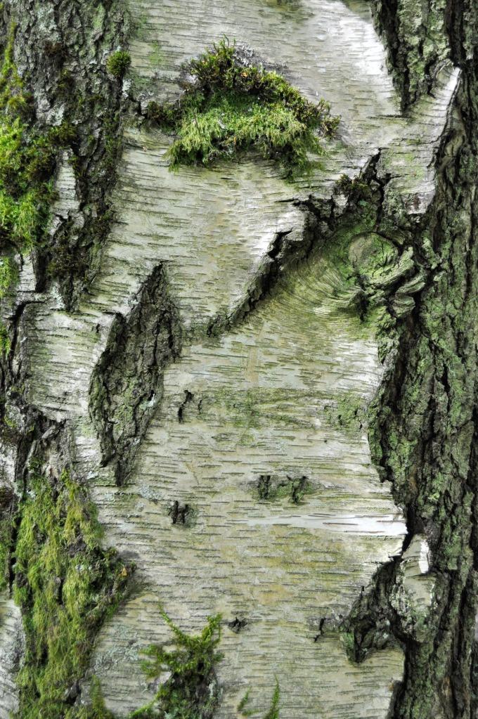 UW_botanical_garden.jpg